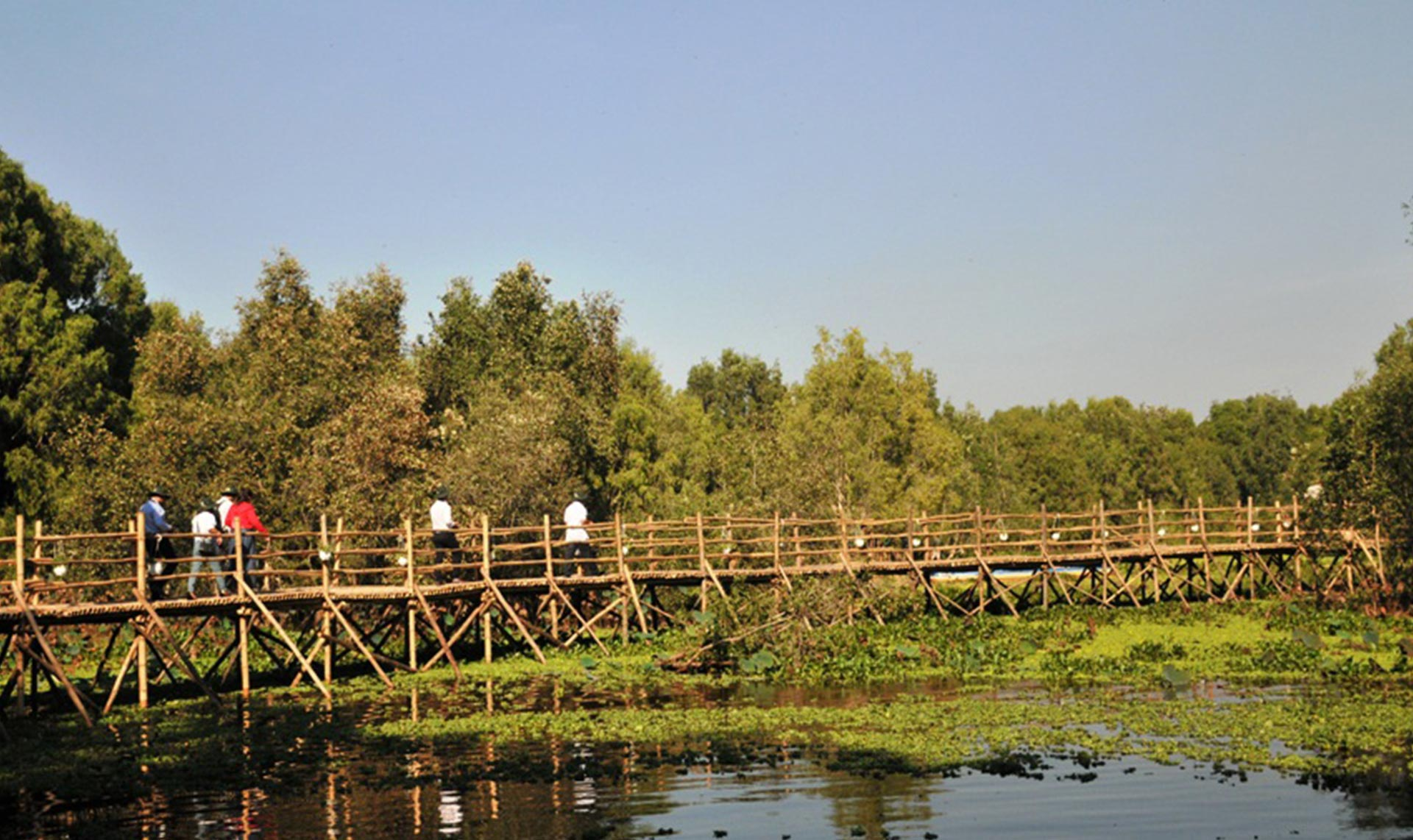 tranquil view of Tra Su bamboo bridge