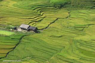 Green terraced field in Bac Ha