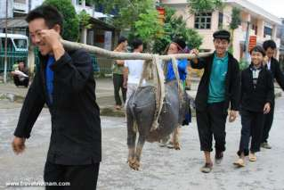 Black pig in Ha Giang