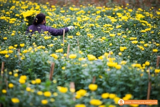 Tay Tuu flower field_19