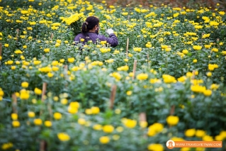 Tay Tuu flower field_20