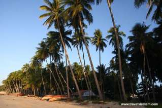 Coconut forest on Mui Ne beach