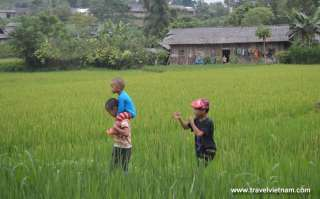 Kids on the rice paddy field
