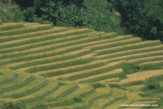 Picturesque view of terrace field in Sapa