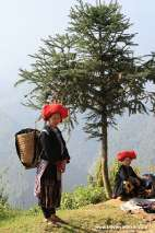 Ethnic women and the pine tree