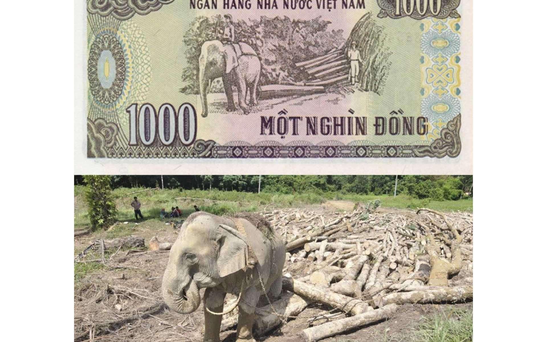 Vietnam Dong ( VND)
