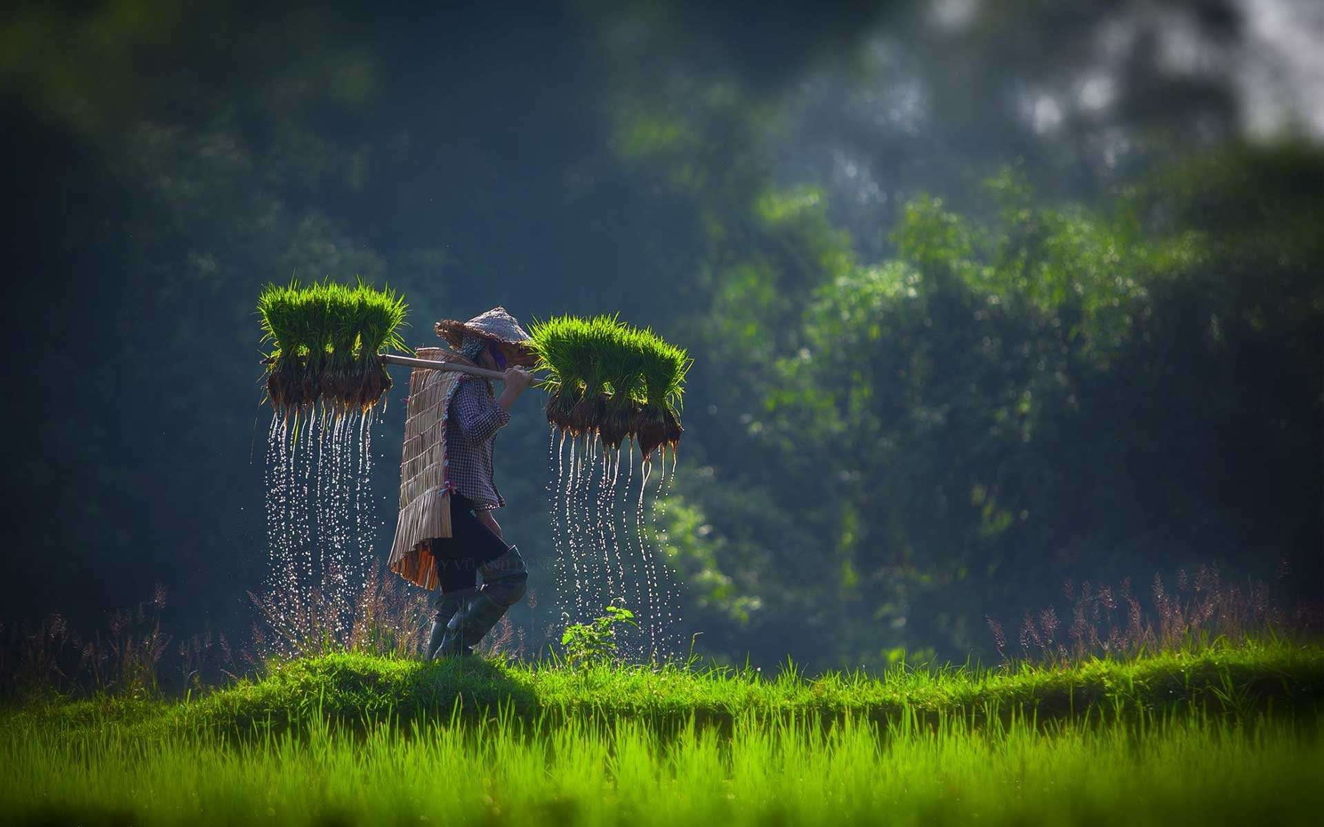 Countryside of Vietnam - Unforgettable Childhood
